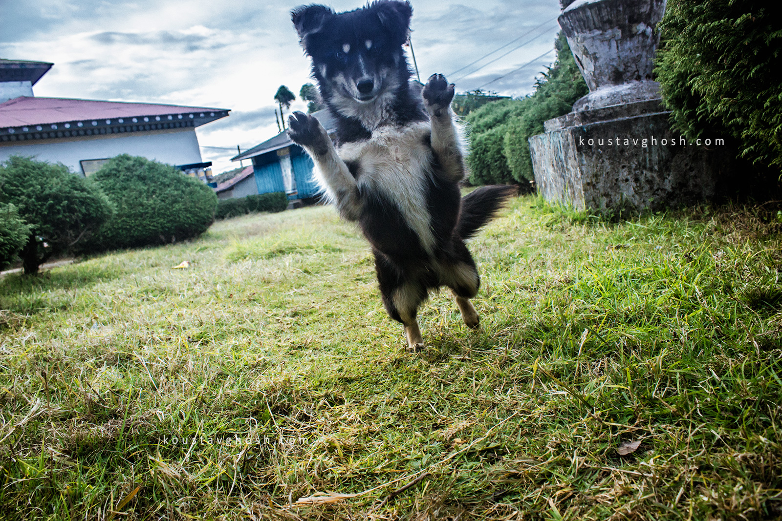 When I tried to click his photograph, he jumped upon my camera.